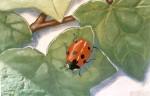 """""""Murgröna"""", detalj, Brahegatan 18, Stockholm, 18m hög, fasadmålning, Keim silikatfärg, kund: Försäkringstjänstemännens pensionskassa, 1997"""