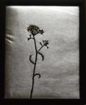 """Torkad blomma"", fritt broderi, 24 x 30 cm, 2010"